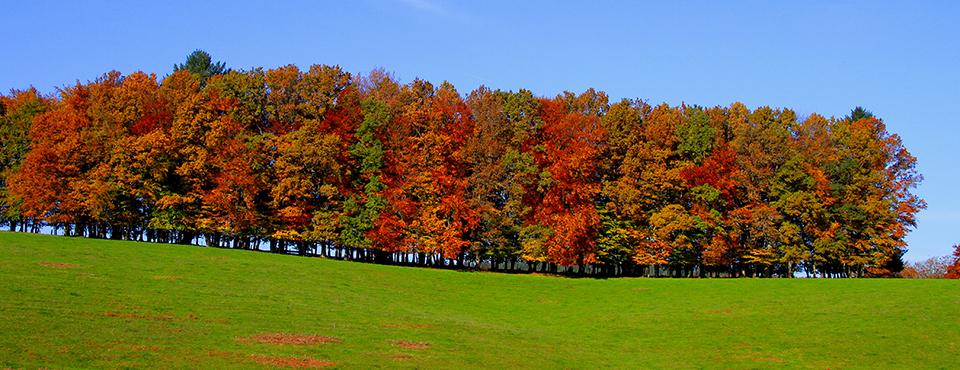 automne chatelus le marceix MHAURY
